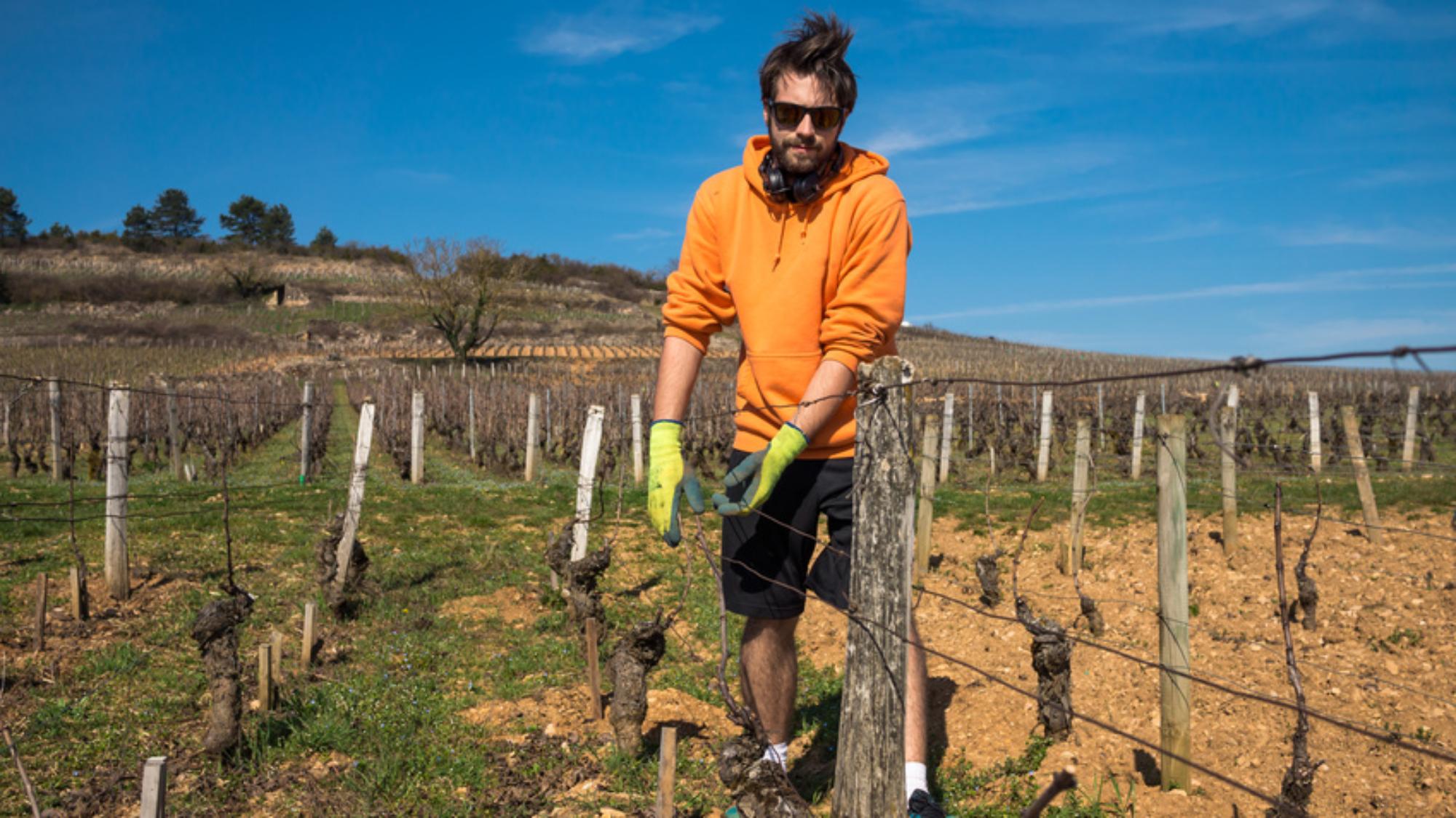 S'installer en viticuluture