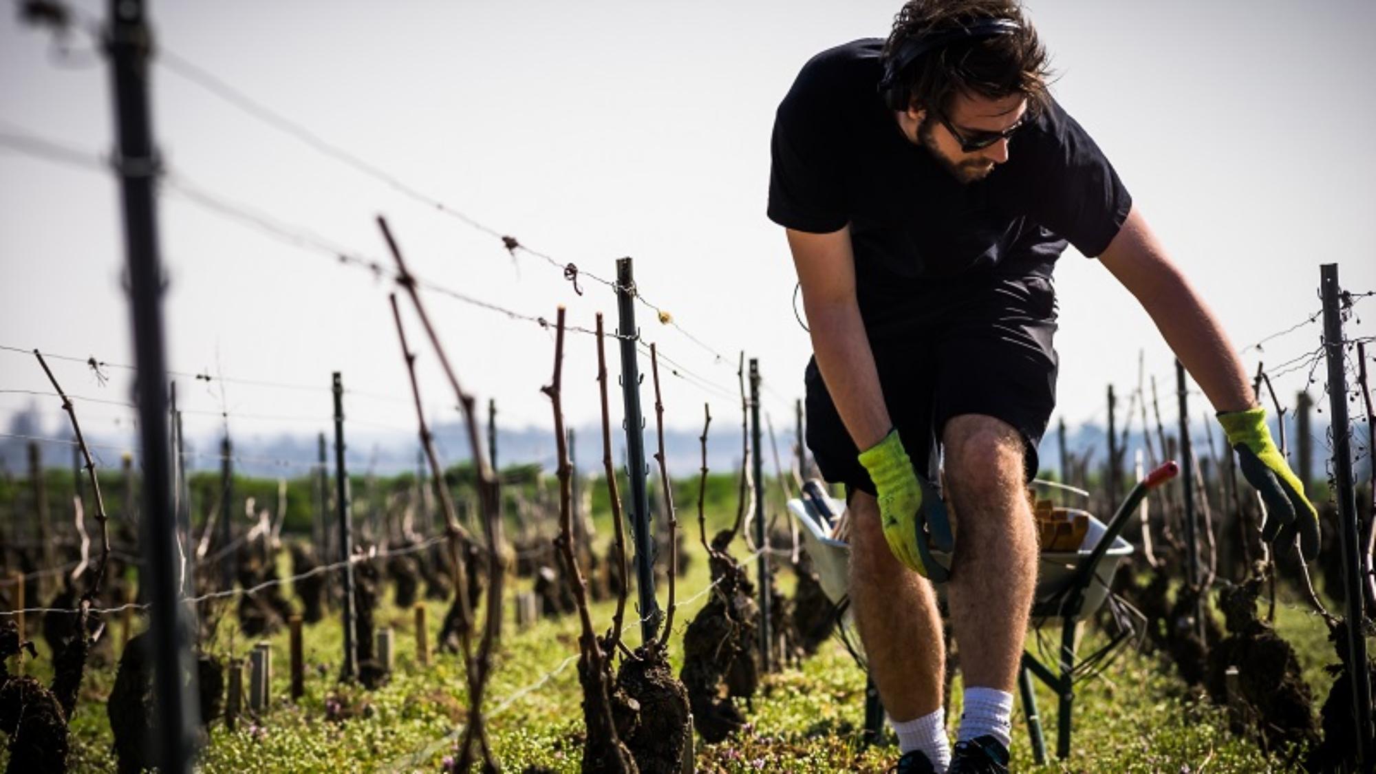jeune viticulteur